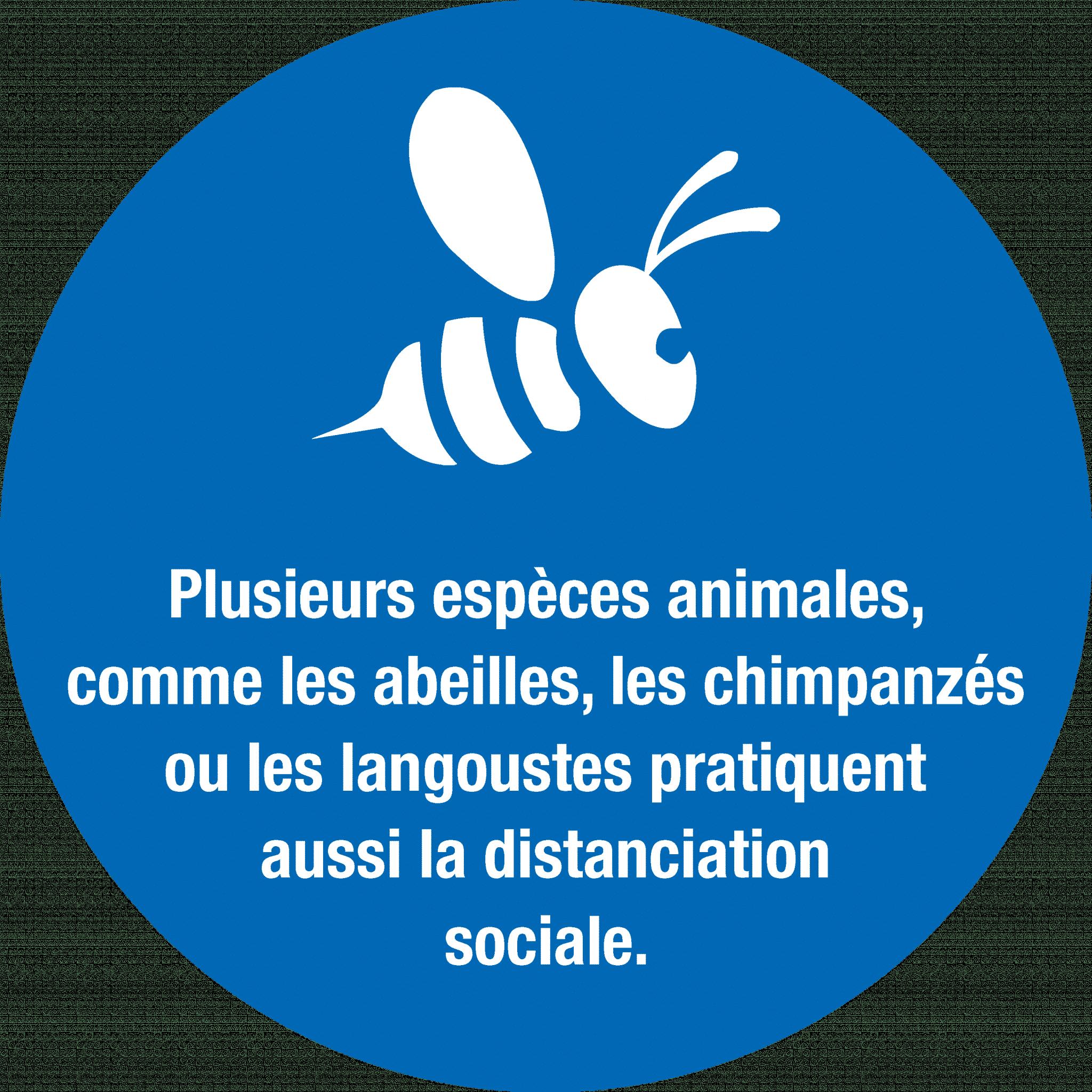 Mesures sanitaires stickers abeilles distanciation
