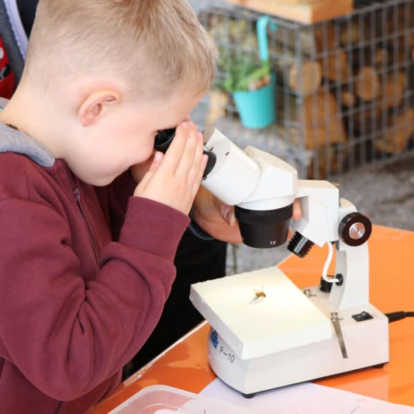 Enfant qui regarde un insecte au microscope