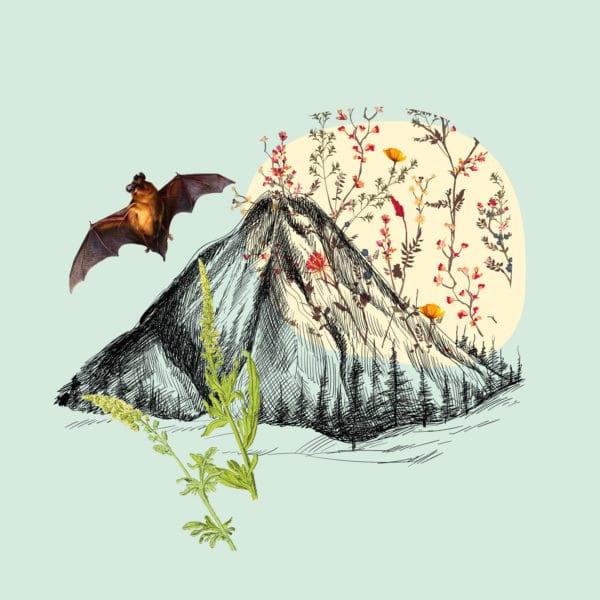 Illustration terril du Pass avec chauve-souris