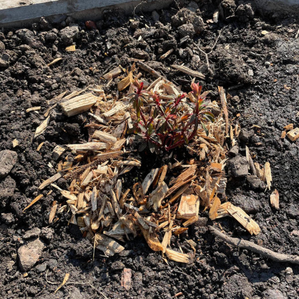 Plante sauvage dans la terre