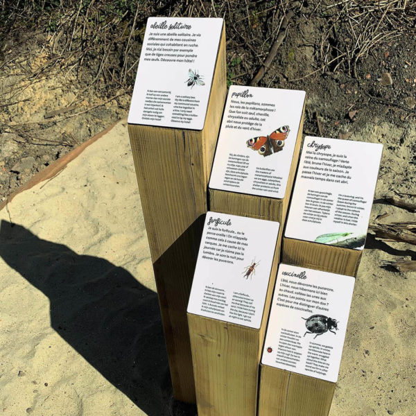 Cartels en bois explicatifs sur les insectes