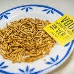 Dégustation de vers - insectes à manger
